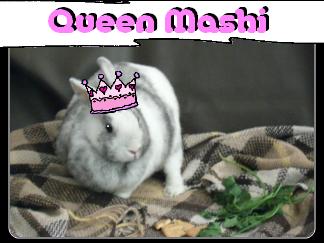 Qmashi