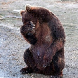 facepalm-bear-560x560